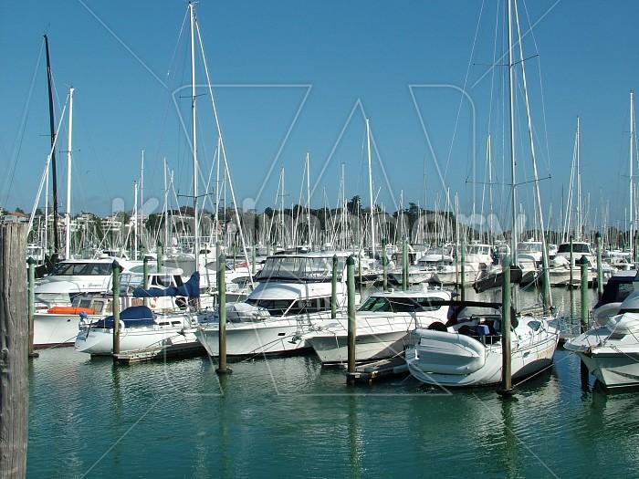 boats in the marina Photo #2177