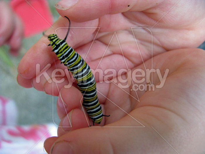 Caterpillar in the hand Photo #6209
