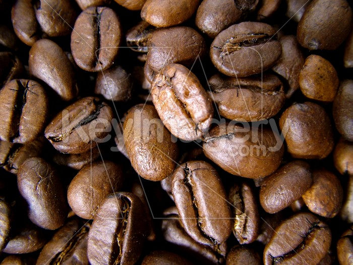 close up coffee beans Photo #1925