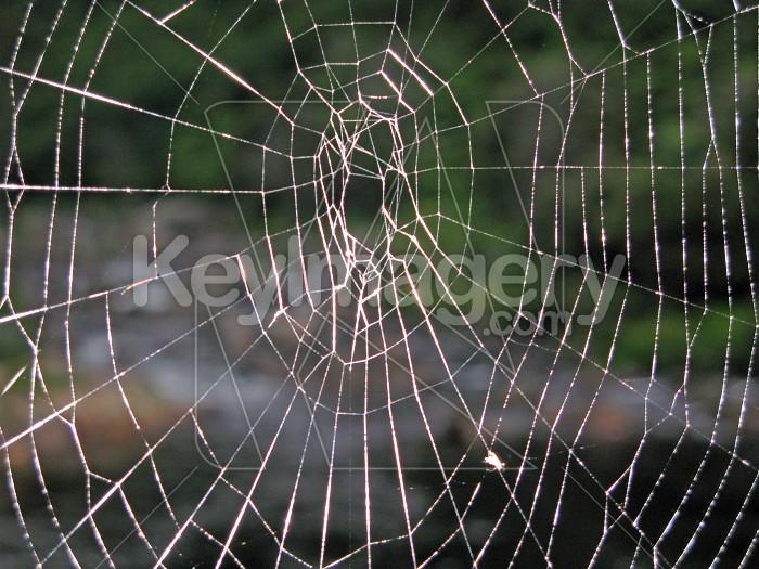Cobweb close up Photo #7183