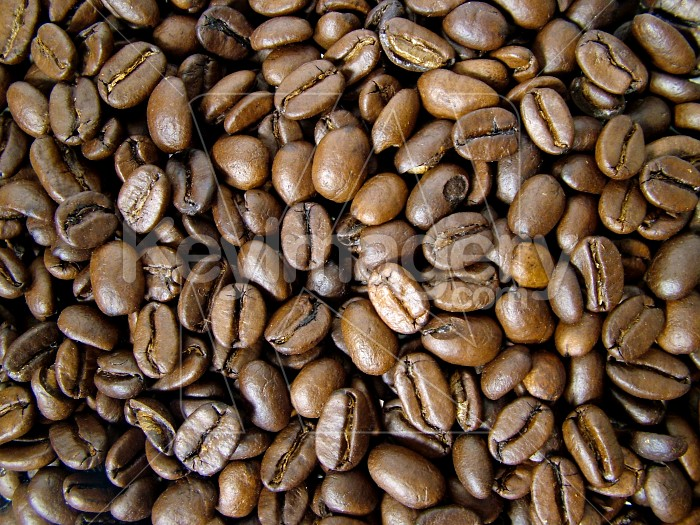 coffee beans background Photo #1924