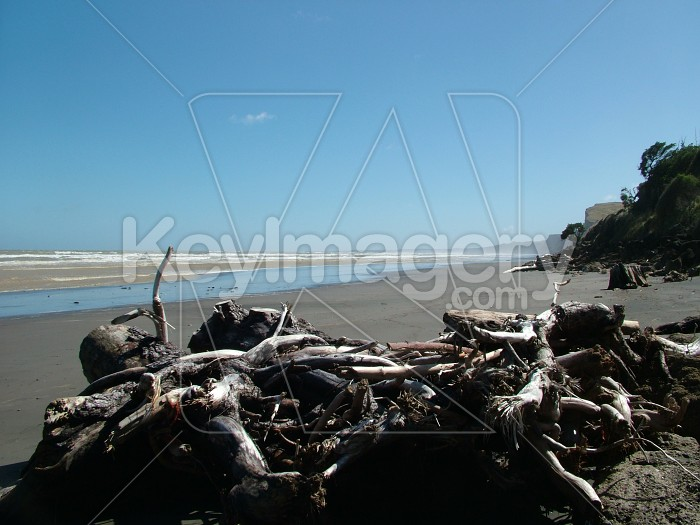 Driftwood on beach Photo #428