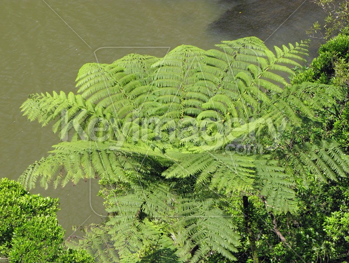 Fern overlooking the pool Photo #7184