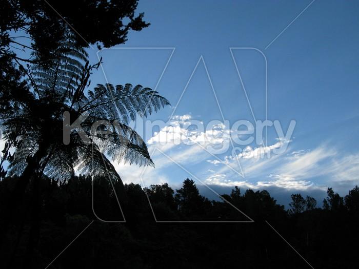 Fern silhouette Photo #7600