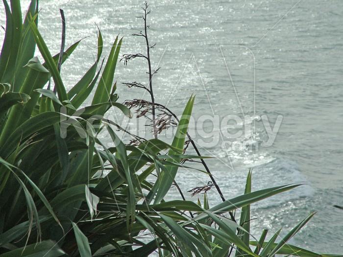 flax and sea Photo #1854