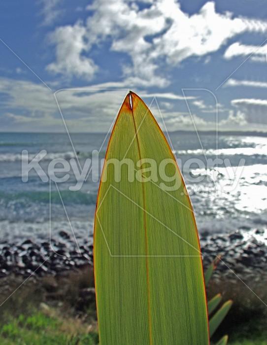 flax leaf and sea Photo #2293
