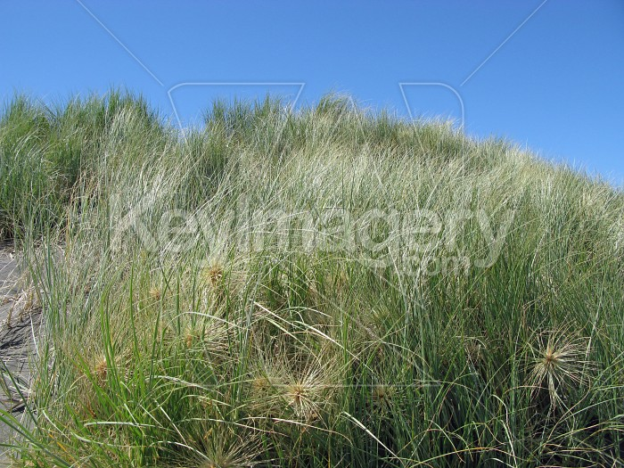 Grassy nob Photo #7032