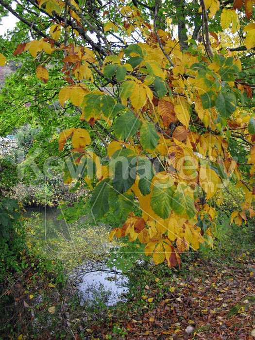 Green to yellow Photo #12672
