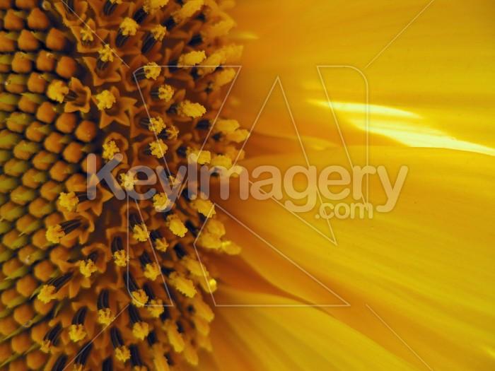 Little light on the petals Photo #6968