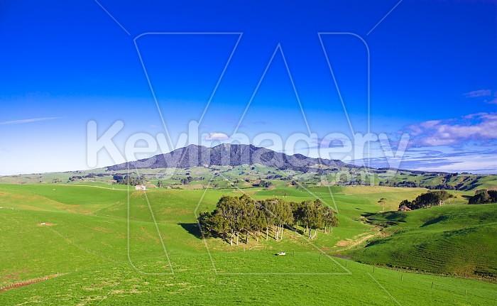 Mt Karioi #3 Photo #47526