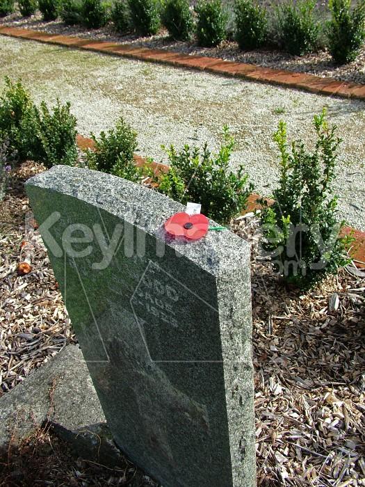 poppy on grave 2 Photo #1248
