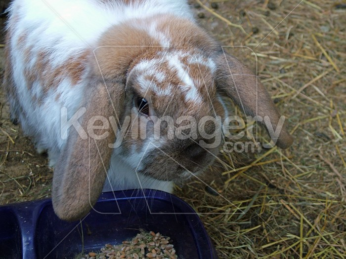 rabbit close up Photo #1020