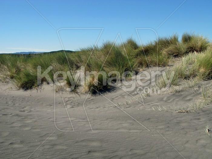 Sand to the beach grass Photo #7038