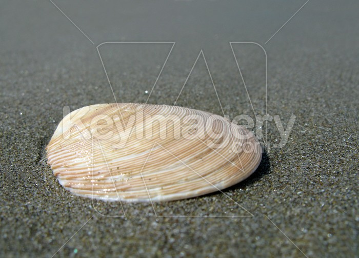 Shell in the sand Photo #7952