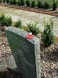 poppy on grave 2