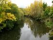 Autumn tree reflections 1