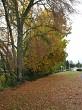 Roadside autumn trees