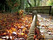 rope fence and autumn leaves