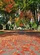 leaf filled street