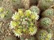 tip of cactus