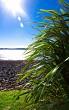 Manu bay flax