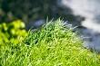 Whale bay grass