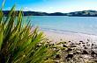 Estuary flax #2