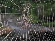 Cobweb close up