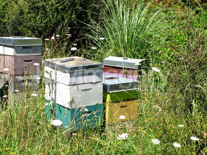 The beehives Photo #7958