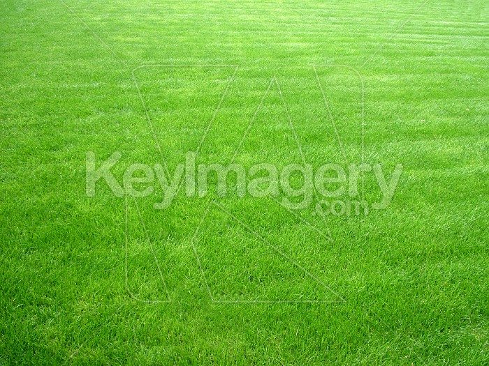 The green grass of home Photo #4939