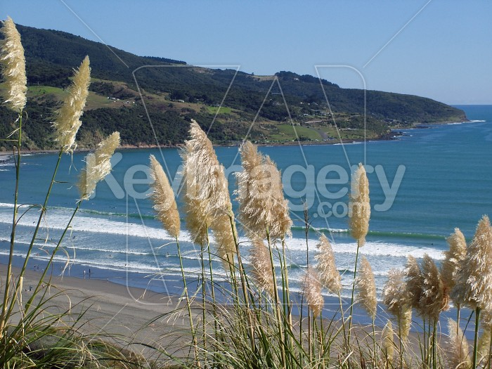 Toi tois overlooking Raglan beaches Photo #609