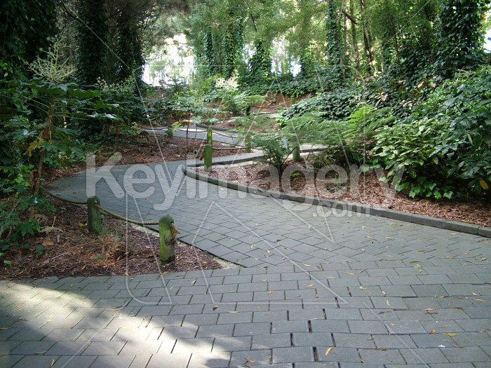 tree lined footpath Photo #2231