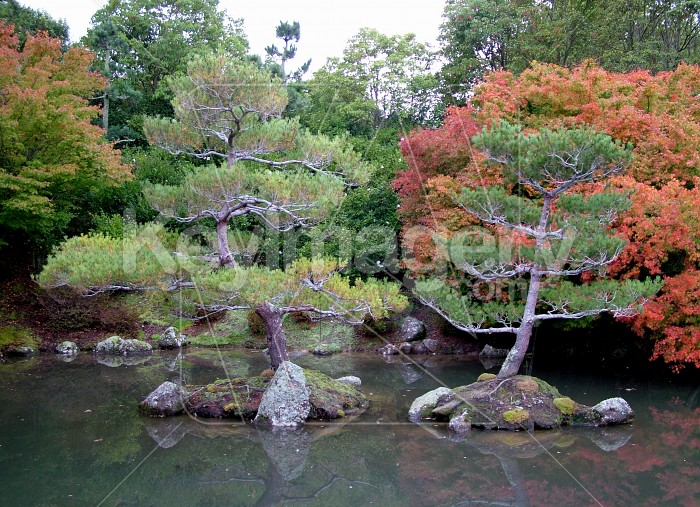 two japanese trees Photo #1348
