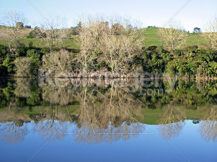 winter trees reflections Photo #2527