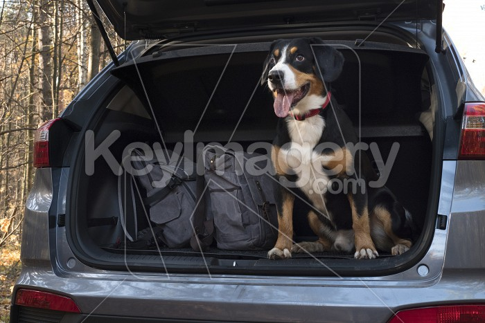 Dog sitting in the car. Photo #59333
