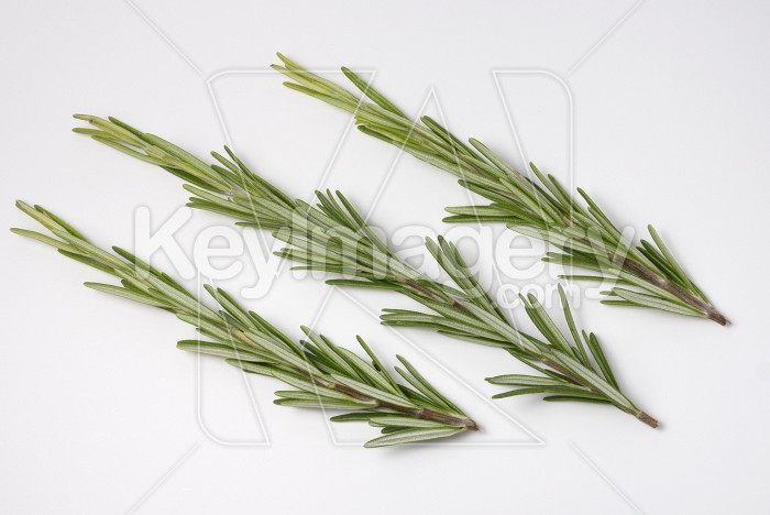 Fresh raw branches of rosemary on white background. Photo #62255