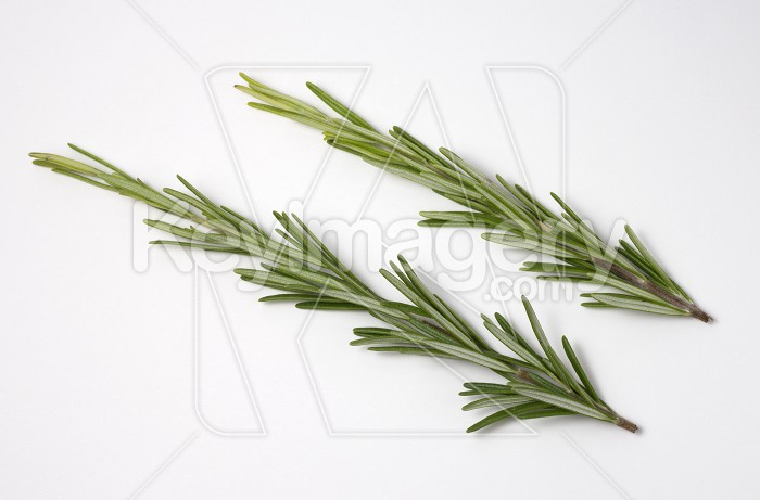 Fresh raw branches of rosemary on white background. Photo #62256