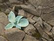 plants growing on stones