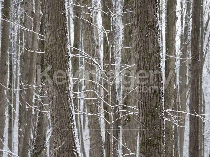 Trees covered with fresh snow in a cold and snowy winter day Photo #61574