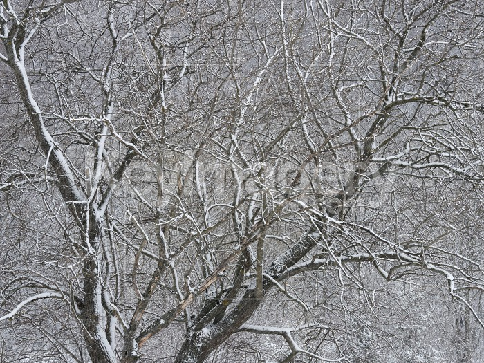 Trees covered with frost and snow Photo #61572