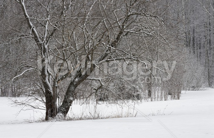 Trees covered with frost and snow. Photo #61573