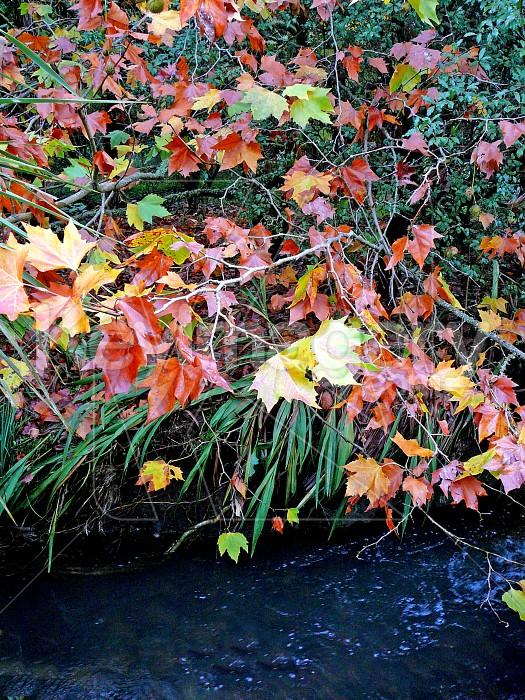 autumn leaves on a tree Photo #1380