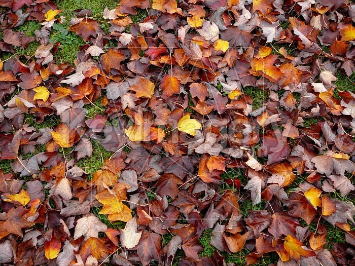 Autumn leaves on ground Photo #1449
