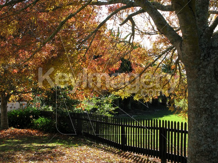 Autumn splendour and the black fence Photo #12482