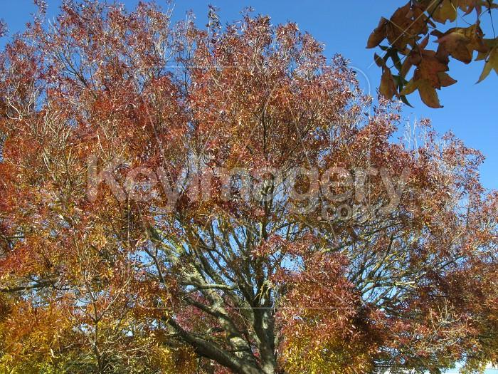 Autumn treetops, Photo #12480