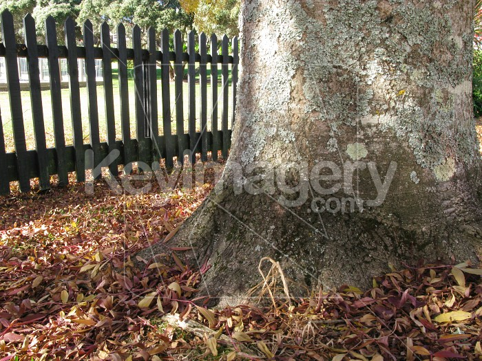 Base of tree with autumn leaves Photo #12483