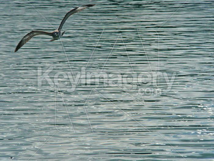 Bird on water Photo #1428