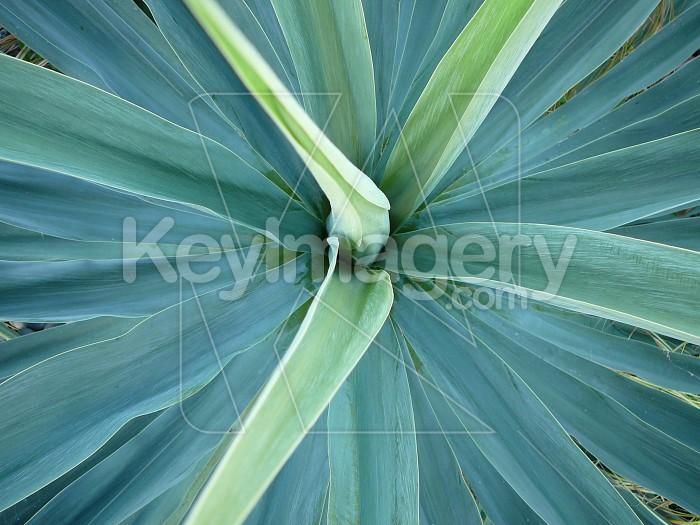 Blue leaves Photo #1341