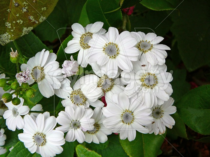 Bunch of white flowers Photo #4013