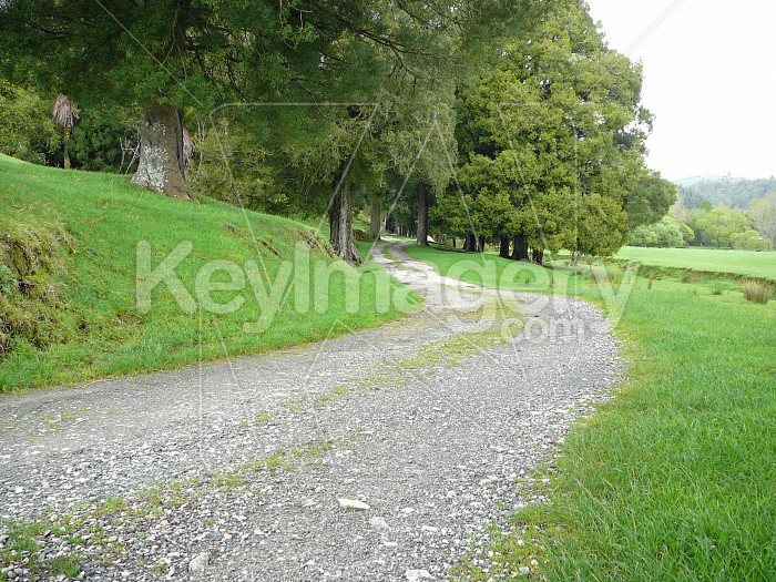 Country road Photo #4723